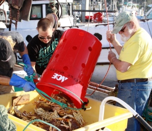 Capt. John Hurwitz and crew unloading their catch of Dungeness crab, Pillar Point Harbor, California